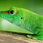 What Does It Mean To Dream About Lizards?