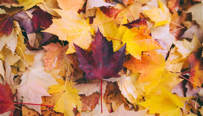 What Does It Mean To Dream About Autumn?