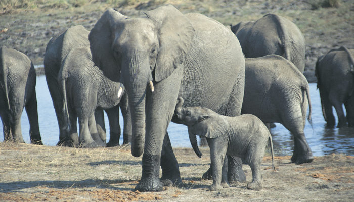 What Does It Mean To Dream About Elephant?