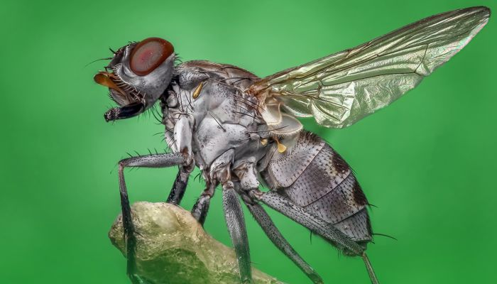 What Does It Mean To Dream About Flies?
