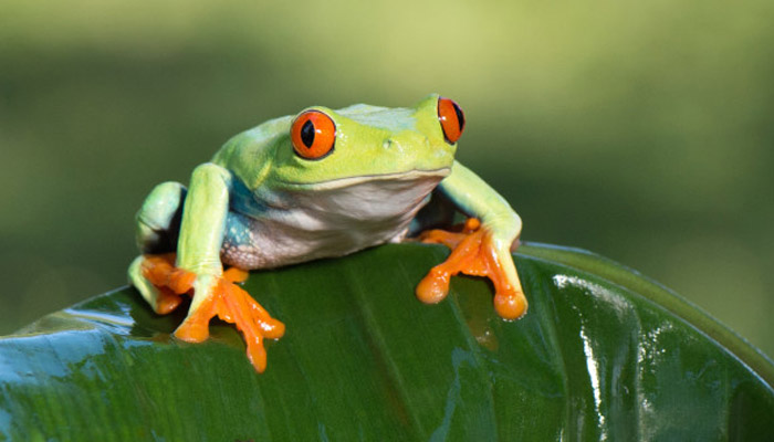 What Does It Mean To Dream About Frogs?