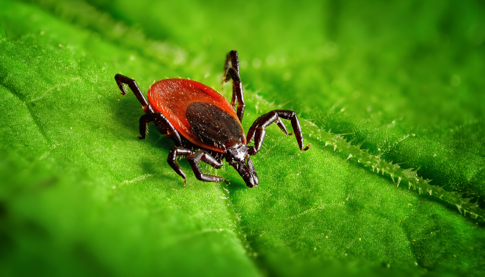 What Does It Mean To Dream About Ticks?