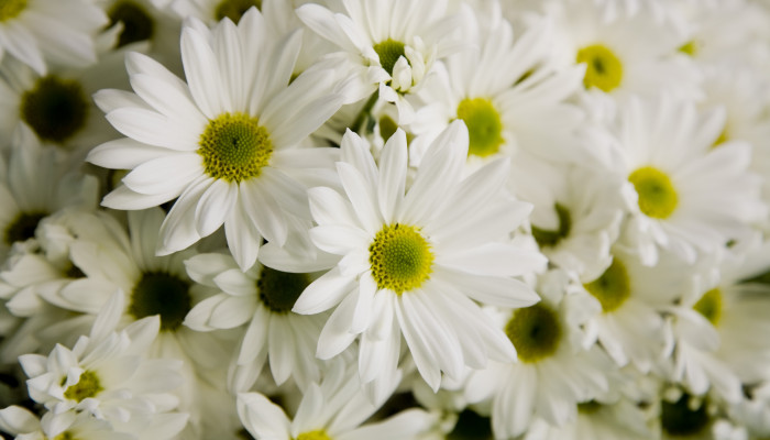 What Does It Mean To Dream About White Flowers?