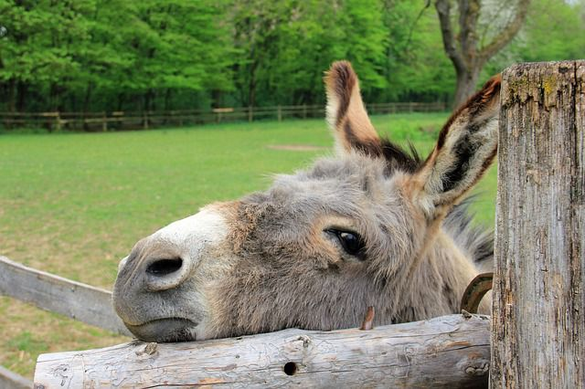 what-does-it-mean-to-dream-about-a-donkey-totems