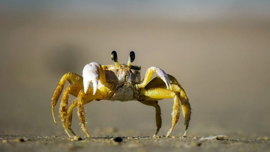 what does it mean to dream about crab