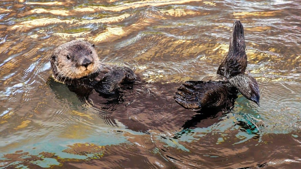 what does it mean to dream about otter (totem)