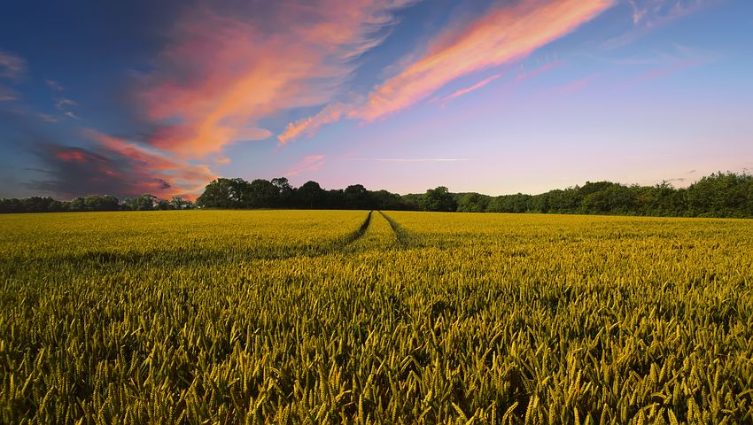 What does it mean to dream about a farm?