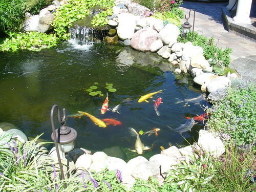 What does it mean to dream about a fish pond?