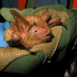 what does it mean to dream about bat?