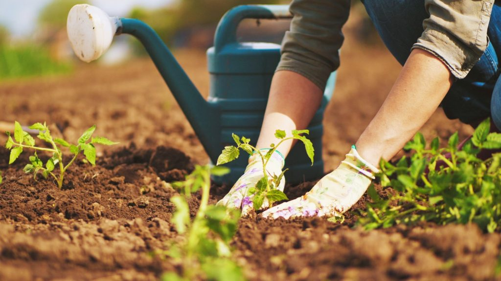 What does it mean to Dream about Gardening ?