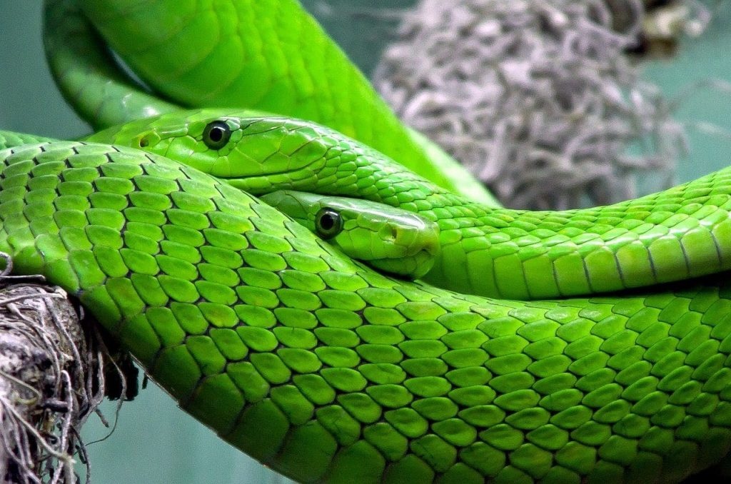 What Does It Mean To Dream About Green Snakes?